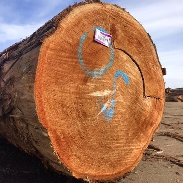 Canada Canadian Western Red Cedar WRC log tree timber cladding fascia